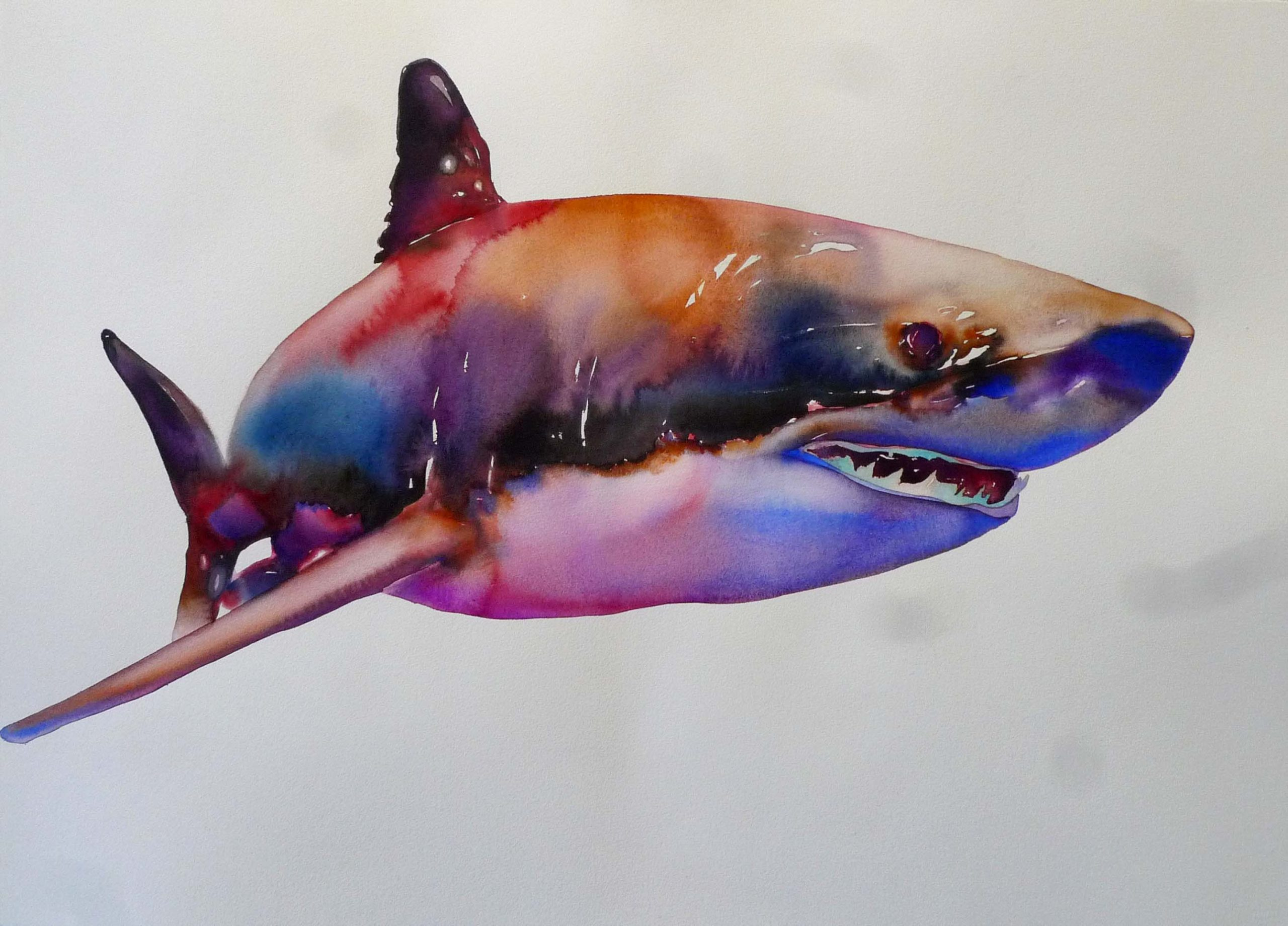 Watercolor Painting of Shark by Carol Carter